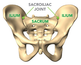 Pregnancy Related Pelvic Girdle Pain and Back Pain